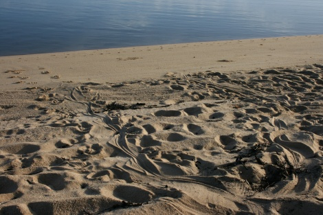 Salt Water Crocodile tracks near my swag Cape York Queensland.