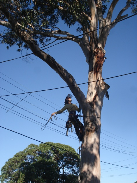 Branch Cutting- Removal