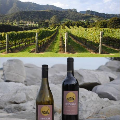 Our wines and vineyard