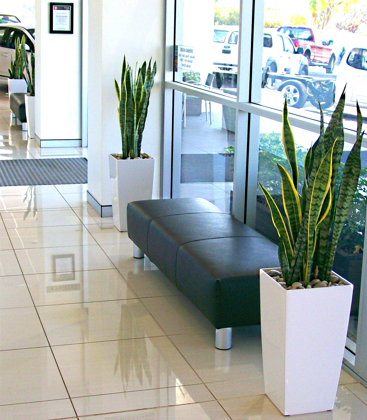 Plant Display LEASELEAVES INDOOR PLANT HIRE Tamworth