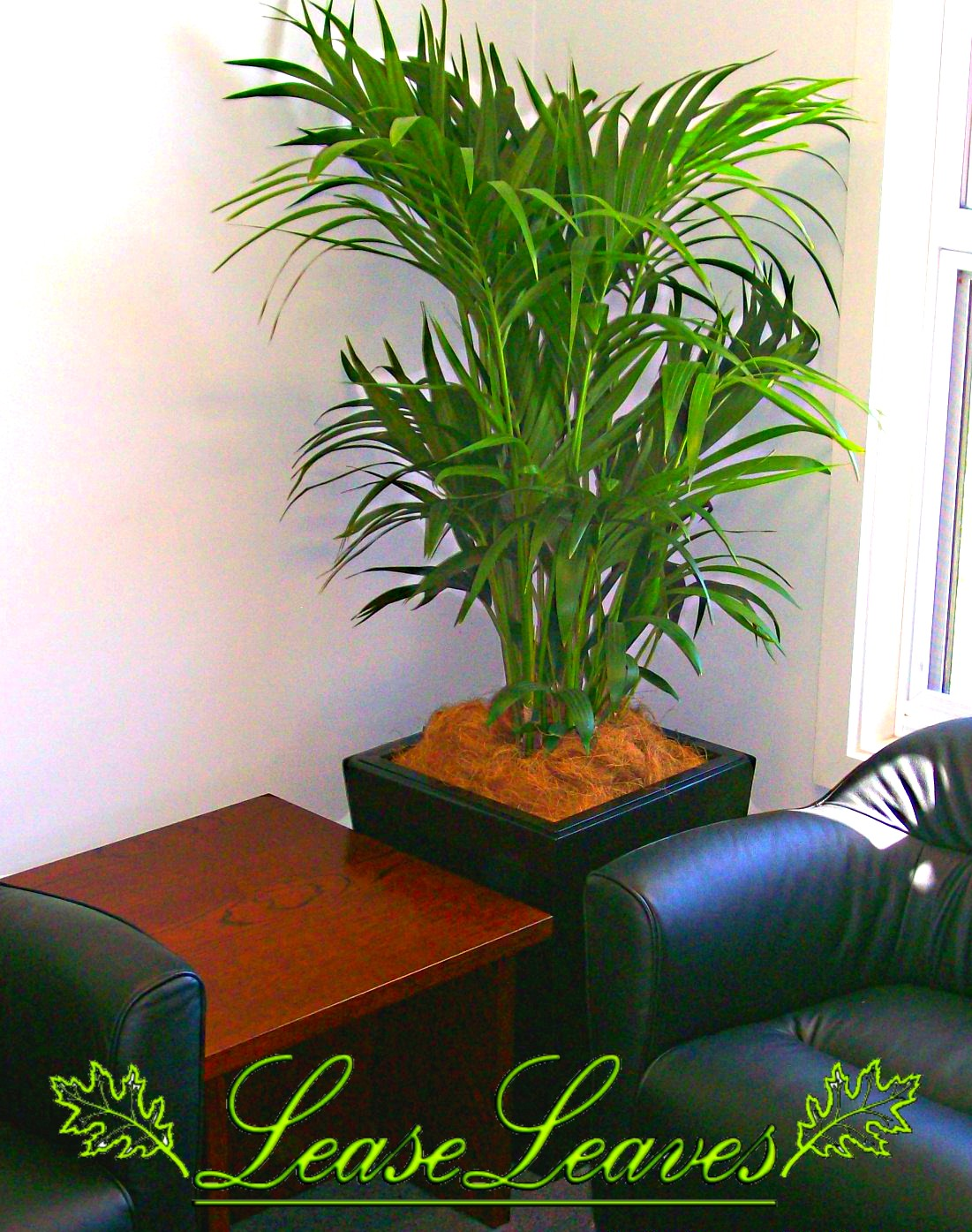 Bamboo Palm - Indoor Plant - LEASELEAVES - INDOOR PLANT ...