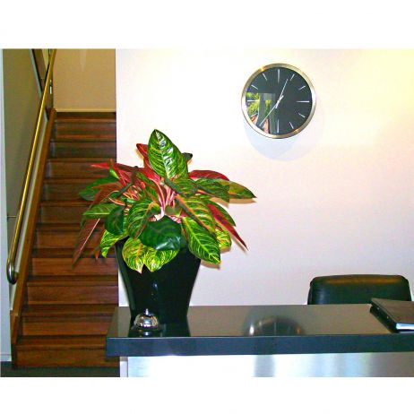 LeaseLeaves - Desk Plant