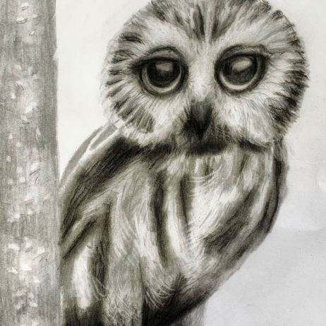 #9 Portrait of a Saw-Whet Owl in Graphite