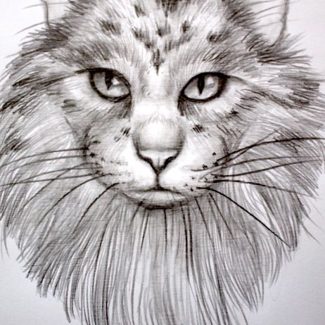 #13 Draw a Portrait of a Cat in Graphite