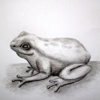 #15 Drawing a Frog in Graphite