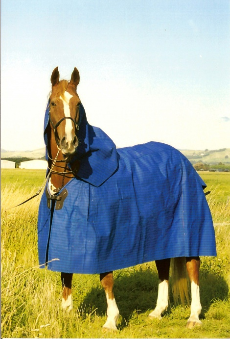 Optional Extras on Horse Covers