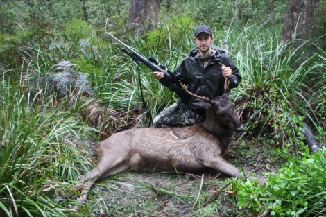 First sambar stag, caught out in the rain