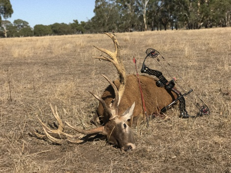 Big red taken with a bow at just 15 yards while waiting in cover