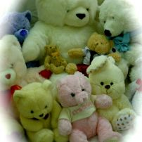 Medium size Teddys