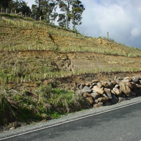 New planting on roadside slip face  (Northland)