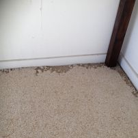 We treat for Carpet Beetle
