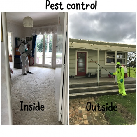 Insect Spraying - Indoors/Outdoors