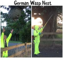German Wasp Nest
