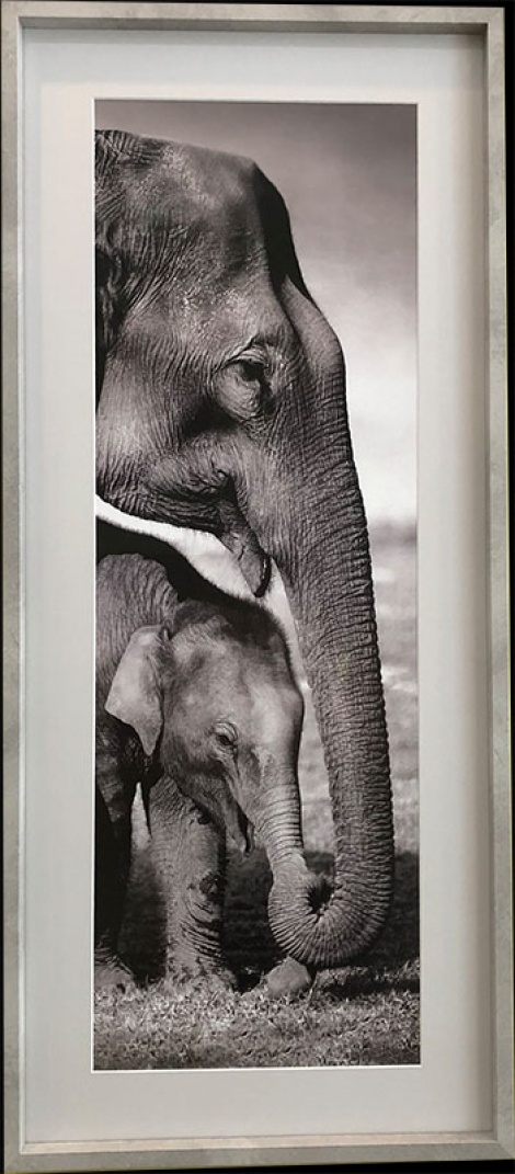 Elephants in Box Frame
