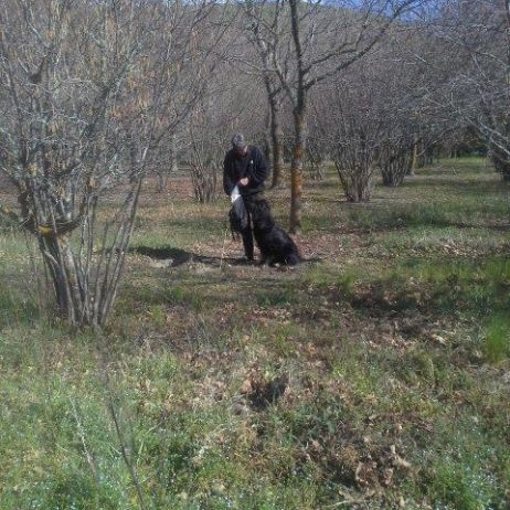 Hunting the truffle