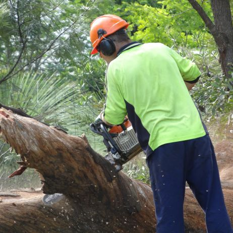 LARGE chainsaw experience