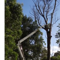 Dismantling of LARGE trees