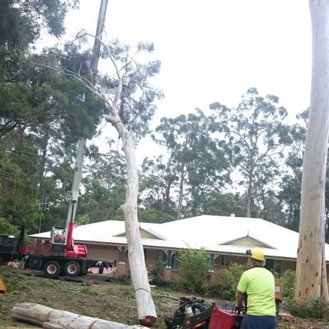 Tree Lopping on ground labouring