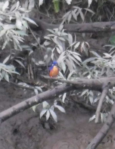 Kingfisher spotted on Chris Dahlberg's tour
