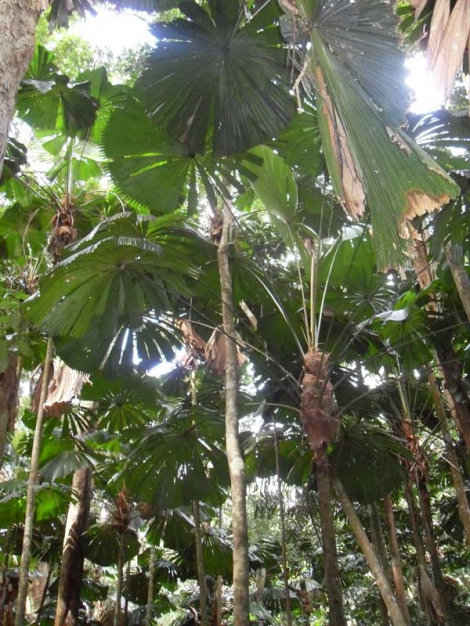 Ancient Palm forest seen on CCWILD tour