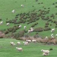 Chch City Tour-countryside