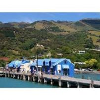 Akaroa Wharf-Starting point of our Christchurch Day Tour..look for us at the land end of the wharf
