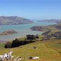 "Another fine view of Akaroa Harbour from the Hilltop- ""Aka"" means harbour and ""roa"" means long"