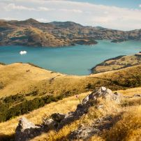 Cruise ship anchored in Akaroa Harbour .....photo credit : Nick Groves ( E S Tours guide)