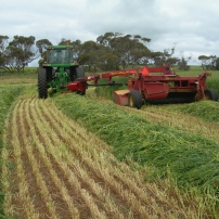 Hay Cutting/Conditioning
