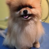 After Grooming