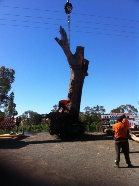 Bowhill (7) Tree Removal