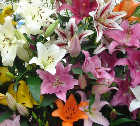 Oriental Lilium Display