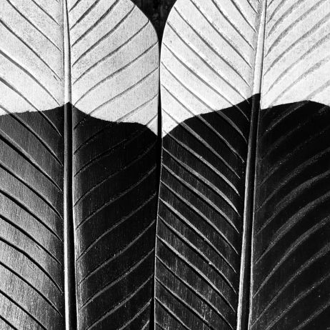 Brown Bach Carved Feathers