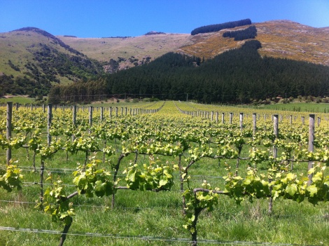 Kaituna Valley Vineyard