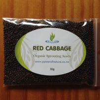 Organic Red Cabbage Seeds