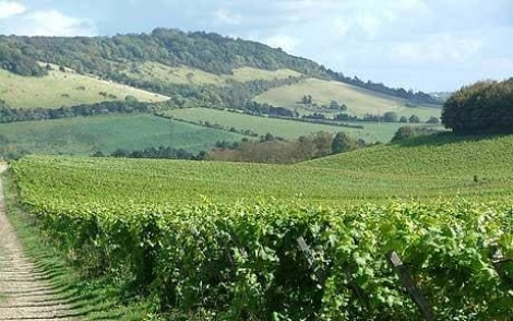 VINES AND WINES: ENGLISH HISTORY LINKED TO CLIMATE CHANGE