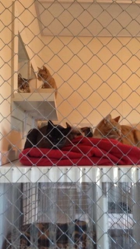Snugly red blanket a popular spot this morning