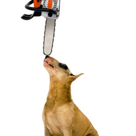 Dog and Chainsaw Adv