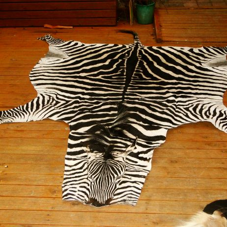 Genuine Tanzanian Birchell Zebra Hide