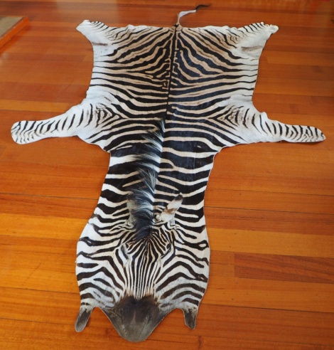 A RARE AND WONDERFUL GENUINE ZEBRA HIDE - ETHICALLY SOURCED NATURAL BEAUTY