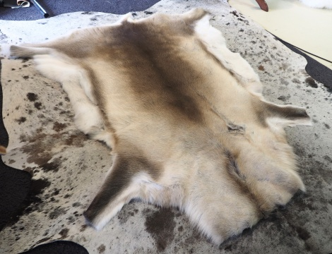 sp/10: Beautiful Distinctive Markings Framed with Pure soft White - A Wonderful Reindeer Hide