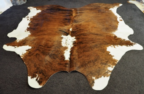 extri/18: A Lovely Classically Marked Brindled Tri Coloured HIde