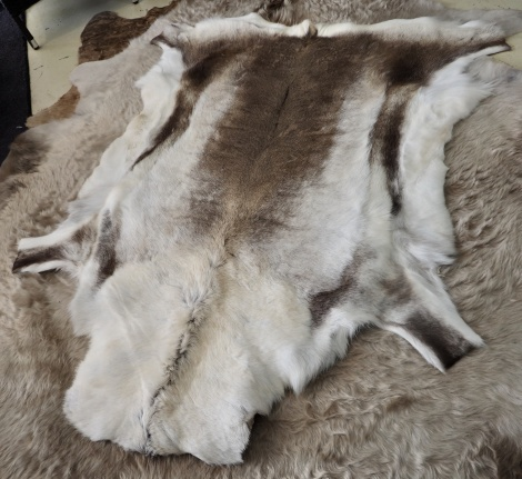R13: A Stunning Large Reindeer Hide - A Beautiful Arctic Accessory