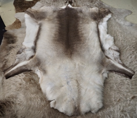 R14: A Beautiful THick & Luxurious Premium Quality Reindeer Pelt - A Nordic Delight