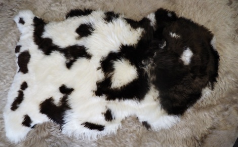 """SWB/^; A Lovely Silken Brown and White """" Jacobs Sheep """" Rare Breed Sheepskin Rug"""