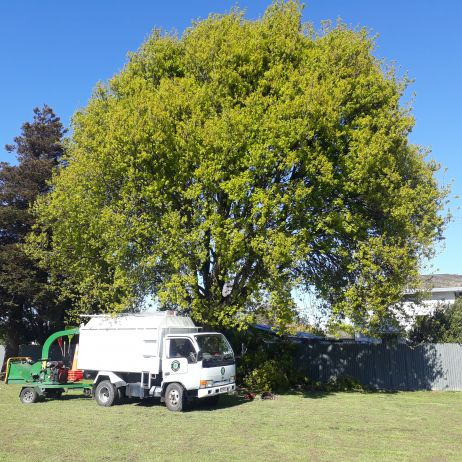 Nice day for a bit of tree pruning