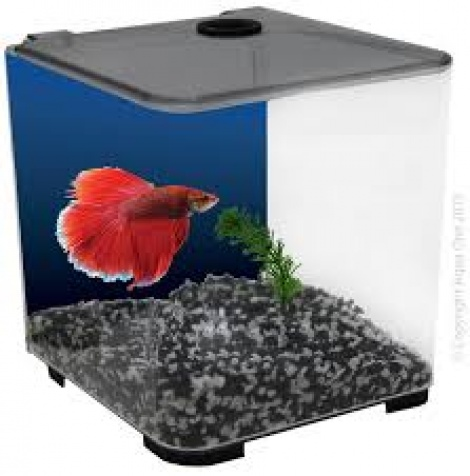 Aqua One Betta Style Black
