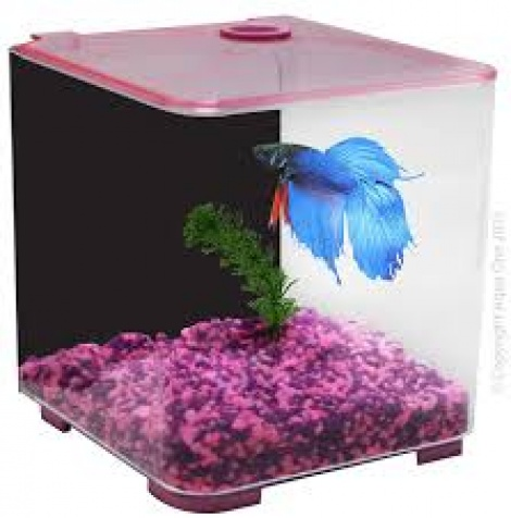 Aqua One Betta Style Pink
