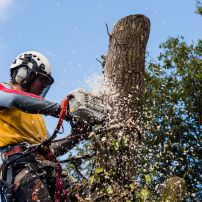 Willow Removal, Fendalton