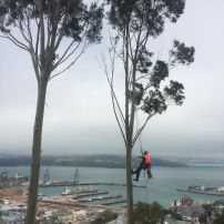 Lyttelton Harbour hillside removal